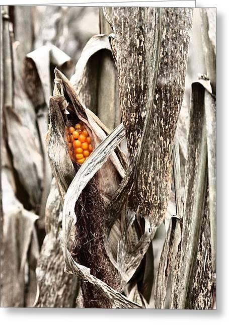 Fall Corn Greeting Card
