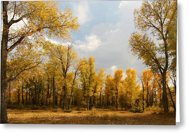 Fall Cottonwoods In Gros Ventre Greeting Card
