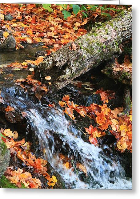 Greeting Card featuring the photograph Fall Creek by Alicia Knust