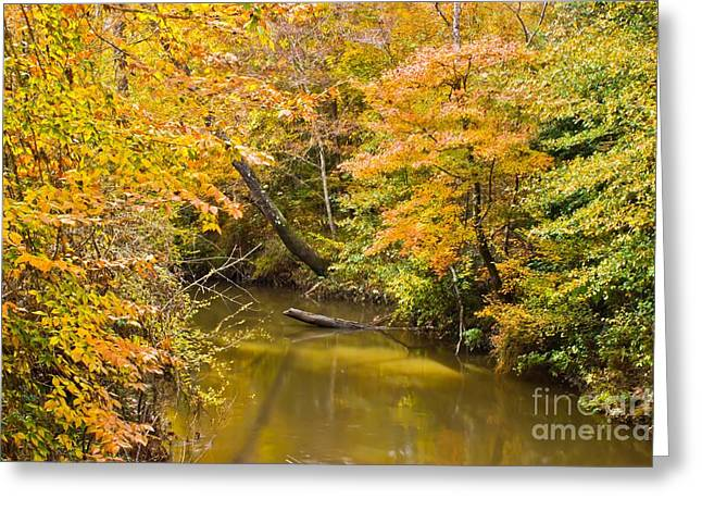 Fall Creek Foliage Greeting Card