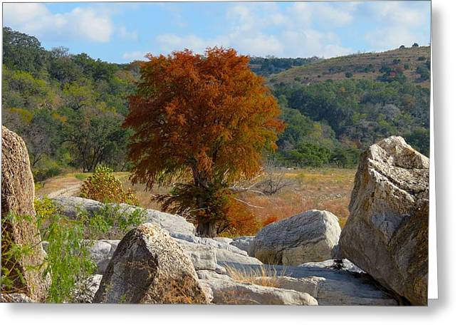 Greeting Card featuring the photograph Fall Cypress by David  Norman