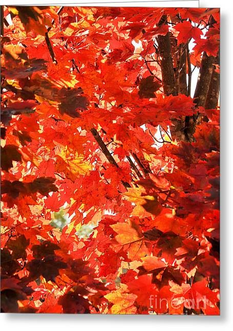 Fall Greeting Card by David Perry Lawrence
