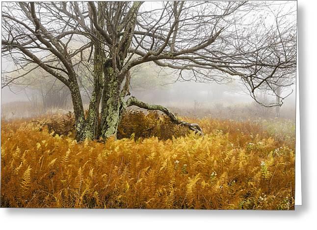 Fall Ferns And Fog Greeting Card by Bill Swindaman