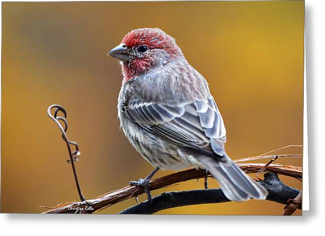 Fall Finch Square Greeting Card by Christina Rollo