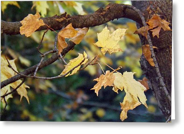 Fall Foilage Greeting Card