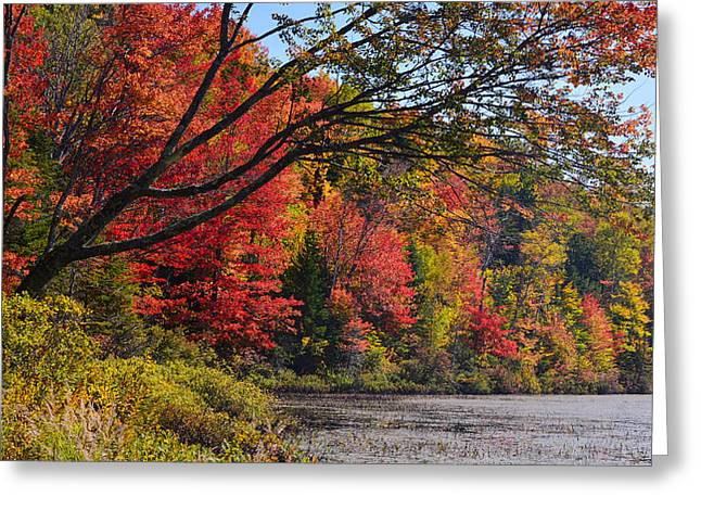 Fall Foliage At Elbow Pond Greeting Card