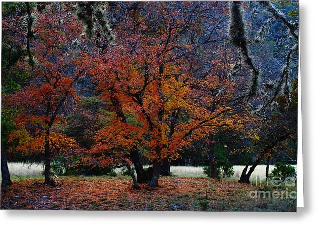 Fall Foliage At Lost Maples State Park  Greeting Card