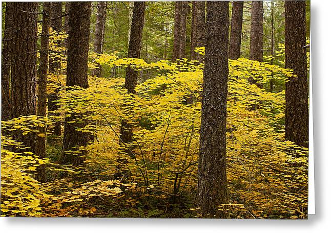 Greeting Card featuring the photograph Fall Foliage by Belinda Greb