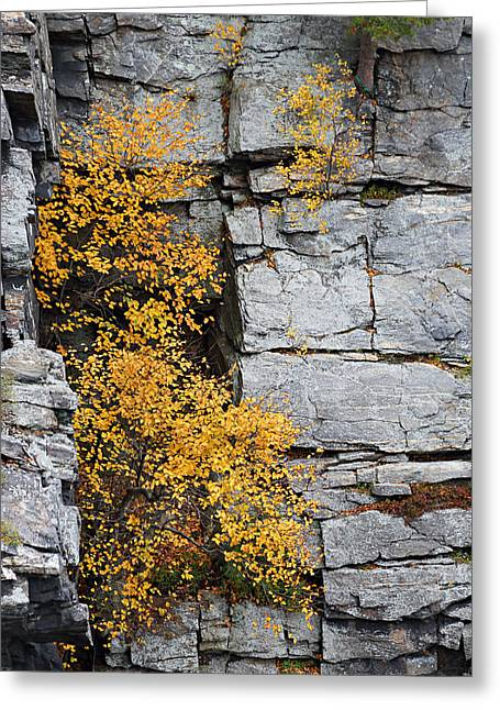 Greeting Card featuring the photograph Fall Foliage Colors 01 by Metro DC Photography