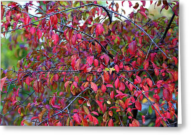Greeting Card featuring the photograph Fall Foliage Colors 05 by Metro DC Photography