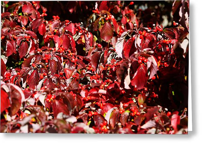 Greeting Card featuring the photograph Fall Foliage Colors 08 by Metro DC Photography