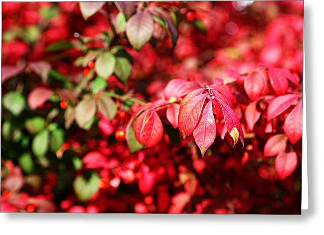Greeting Card featuring the photograph Fall Foliage Colors 10 by Metro DC Photography