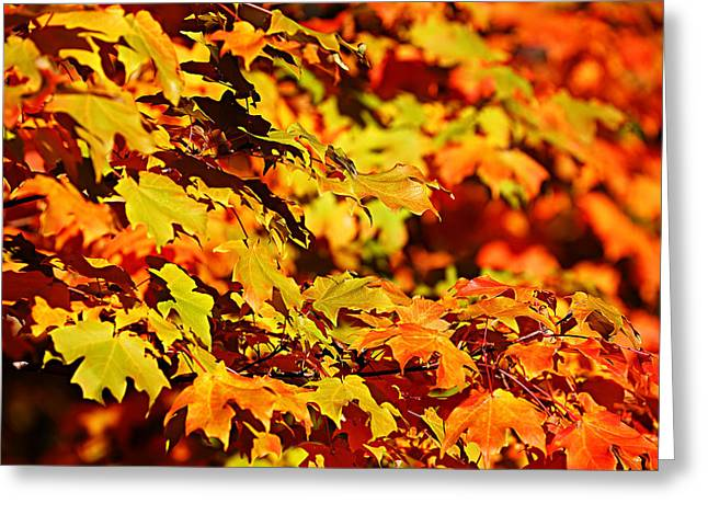 Greeting Card featuring the photograph Fall Foliage Colors 13 by Metro DC Photography