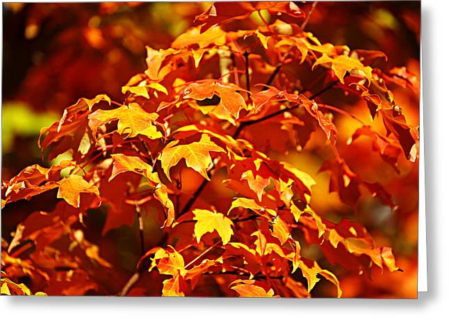 Fall Foliage Colors 14 Greeting Card by Metro DC Photography