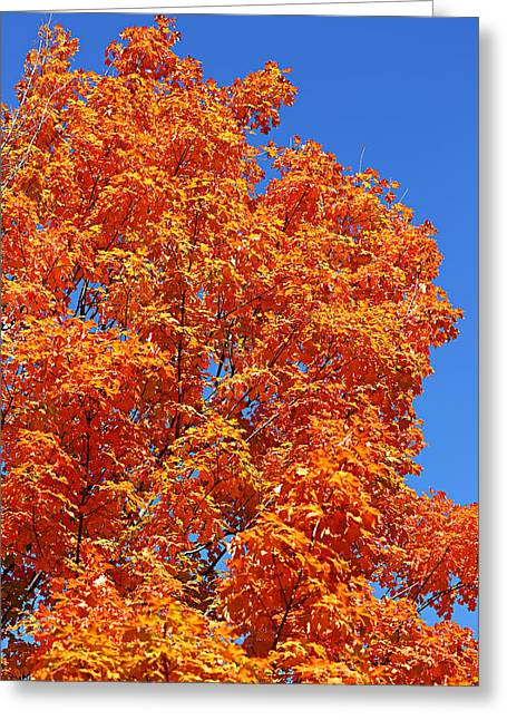 Greeting Card featuring the photograph Fall Foliage Colors 18 by Metro DC Photography