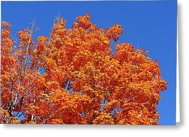 Fall Foliage Colors 19 Greeting Card by Metro DC Photography