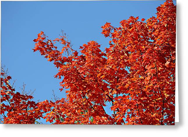 Greeting Card featuring the photograph Fall Foliage Colors 20 by Metro DC Photography
