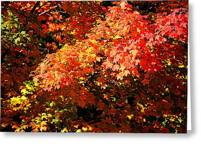 Fall Foliage Colors 21 Greeting Card by Metro DC Photography