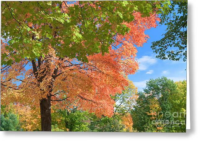 Greeting Card featuring the photograph Fall Foliage Devils Lake Wisconsin by David Perry Lawrence