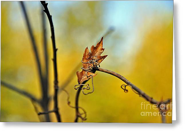 Fall Foliage Foiled Greeting Card by Al Powell Photography USA