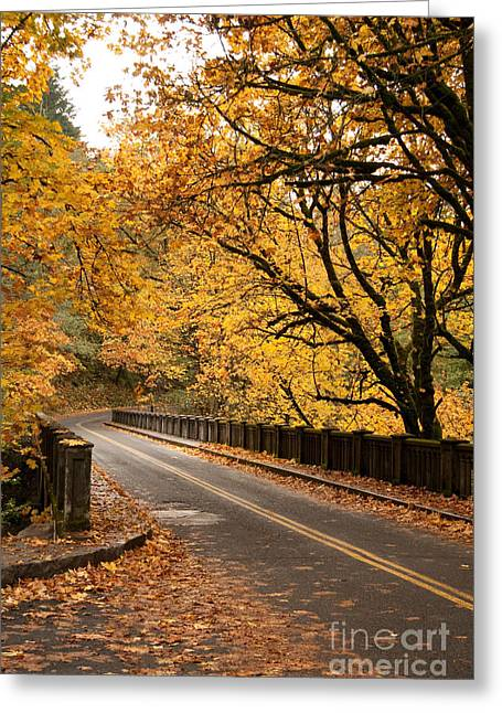 Fall Foliage On The Highway Greeting Card by Cari Gesch