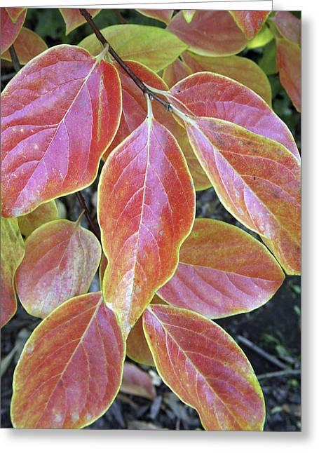 Fall Foliage, The Autumn Leaves Greeting Card
