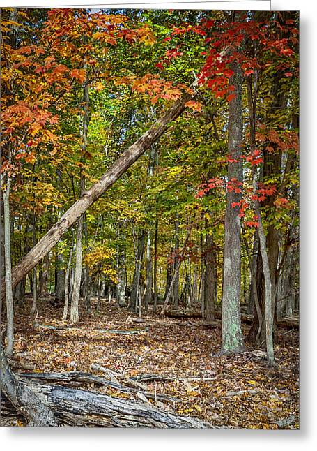 Fall Forest Greeting Card by David Cote