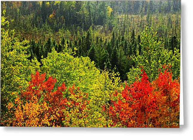 Fall Forest Rain Storm Greeting Card by Elena Elisseeva