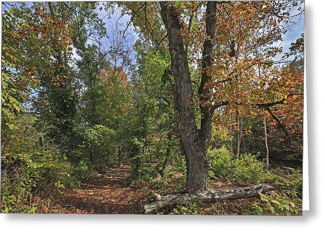 Fall Forest Trail Ozark-saint Francis Greeting Card