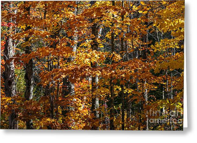 Fall Forest With Orange Leaves Greeting Card