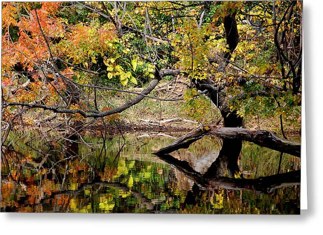 Fall From The Water Greeting Card