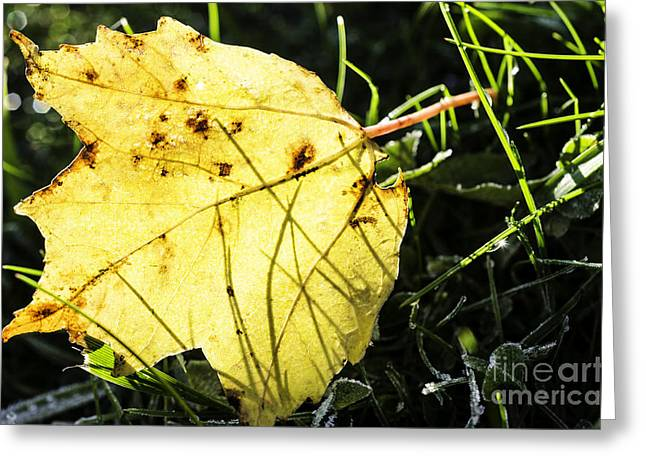 Fall Frost Greeting Card by Thomas R Fletcher