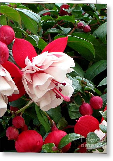 Fall Fuchsia Greeting Card