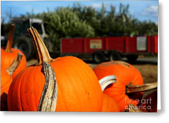Fall Hayride Greeting Card by Andrea Anderegg