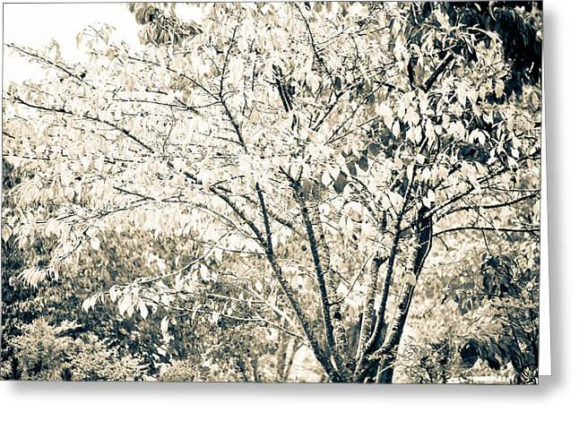 Fall In Black And White Greeting Card by Ronda Broatch