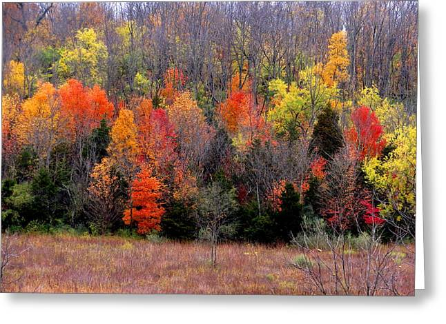 Fall In Dayton Ohio Greeting Card by Eric Switzer