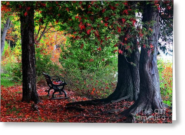 Fall In Henes Park Greeting Card