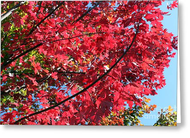 Greeting Card featuring the photograph Fall In Illinois by Debbie Hart