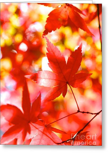 Fall In Love Again Greeting Card by Jay Nodianos