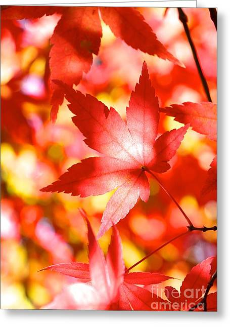 Fall In Love  Greeting Card by Jay Nodianos