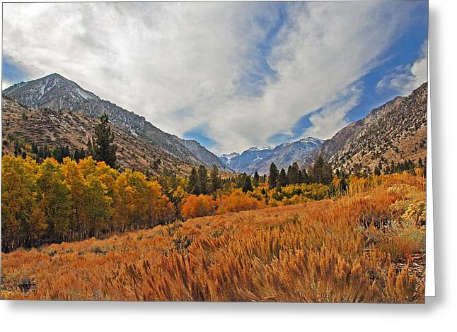 Fall In Lundy Canyon Greeting Card by Lynn Bauer
