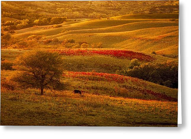 Fall In The Flint Hills Greeting Card