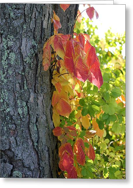 Fall In The Orchard Greeting Card by Mary Bedy
