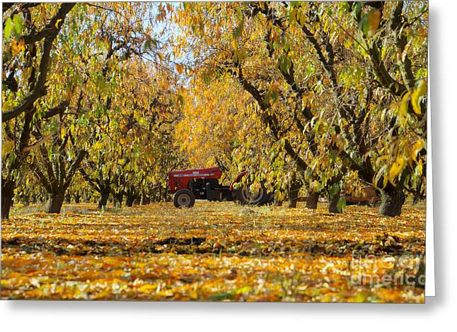 Fall In The Peach Orchard Greeting Card by Jim and Emily Bush