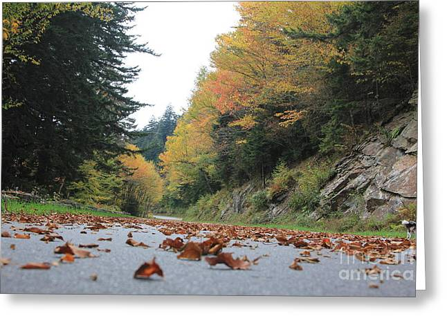 Fall In The Smokies Greeting Card
