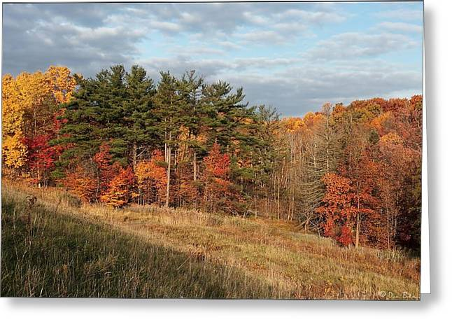 Fall In The Valley Greeting Card by Daniel Behm