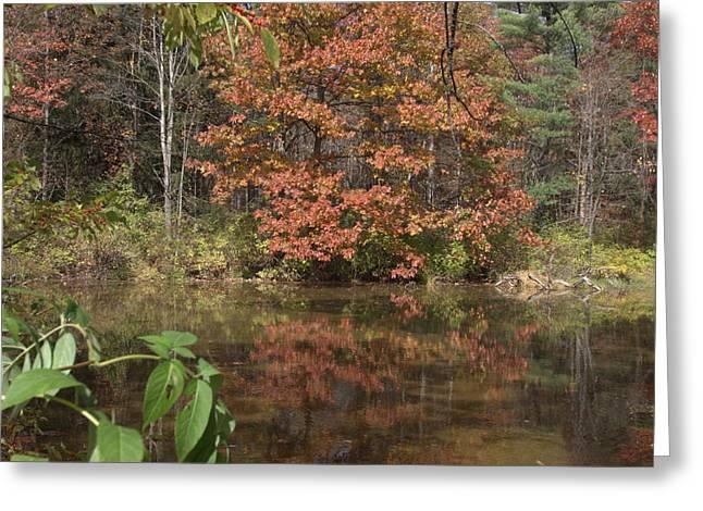 Fall In Upsrate Ny Greeting Card by Edward Kocienski