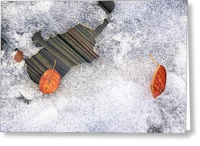 Fall Into Winter Greeting Card