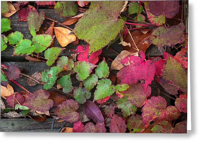 Greeting Card featuring the photograph Fall Ivy by Wayne Meyer