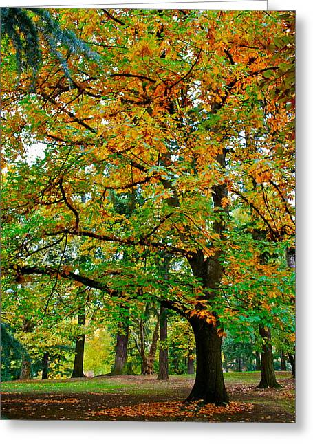 Fall Kissing The Leaves  Greeting Card by Rae Berge